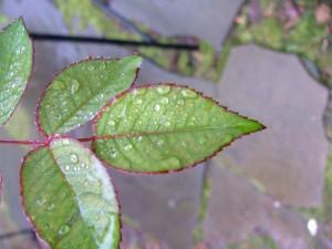 Fall Rain GetPlanting Garden