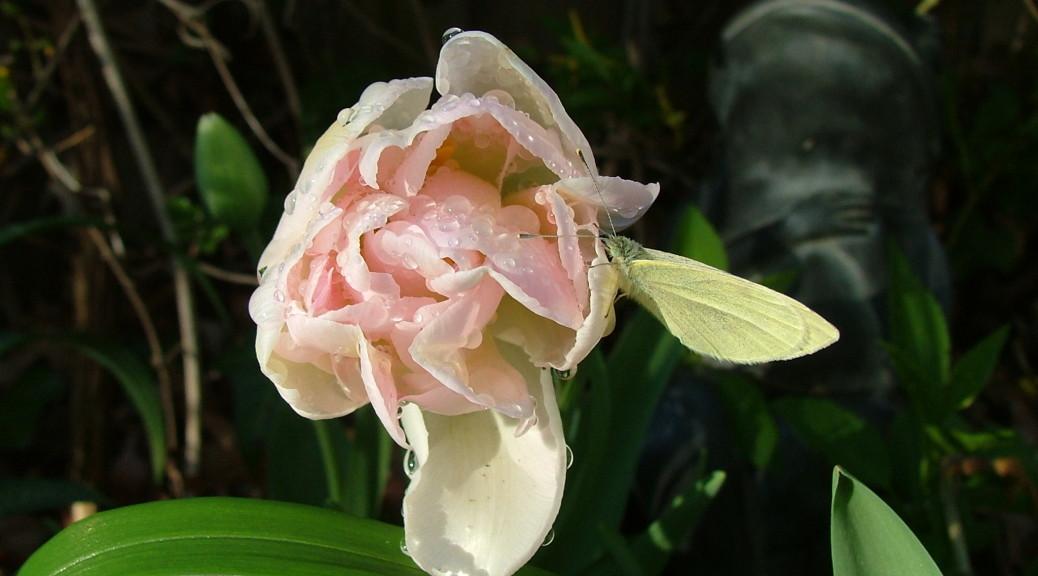 Tulip 2006 Get Planting