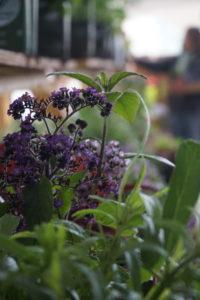 Plantsale2 small