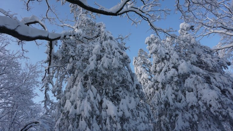 A surprising winter