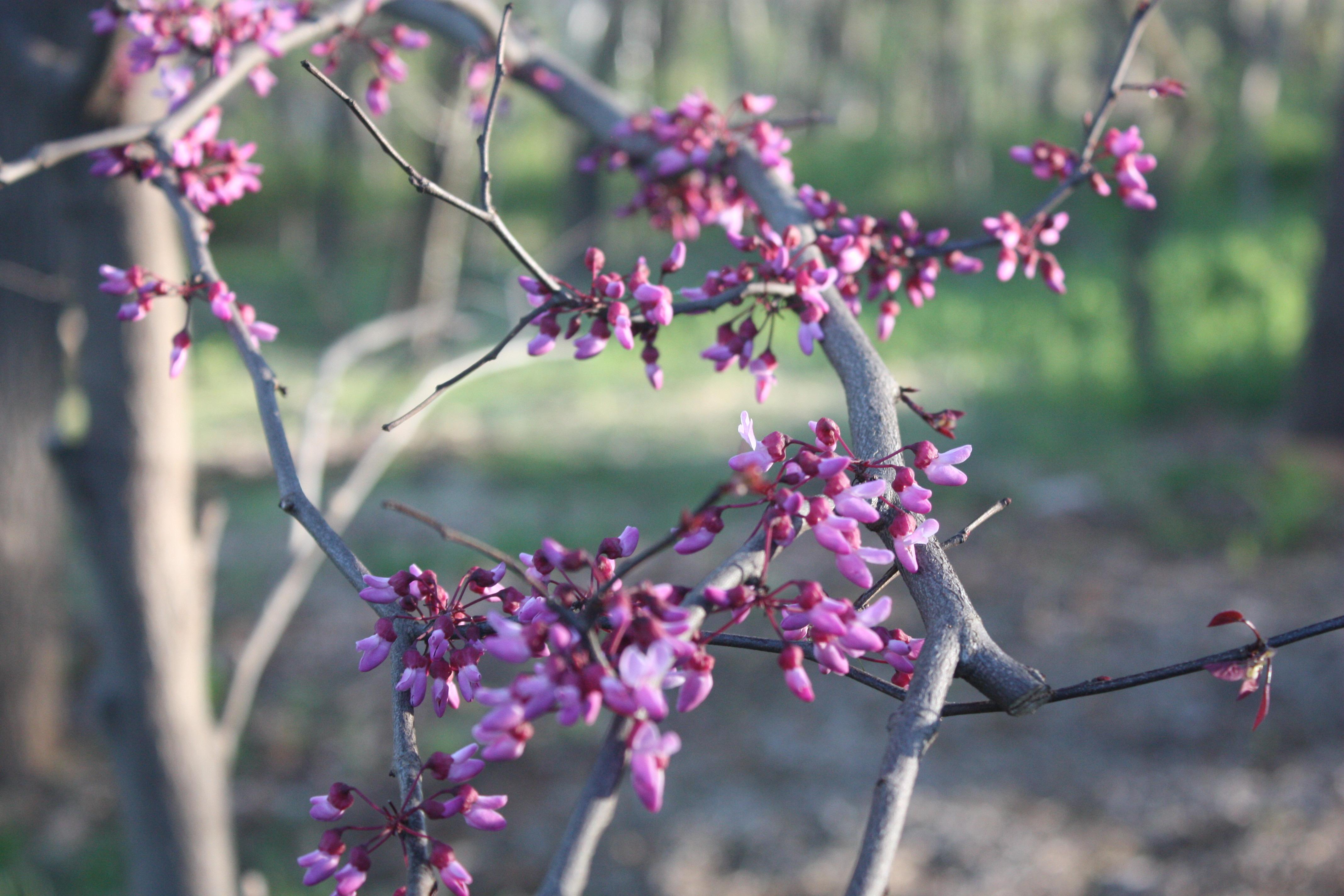 April abundance